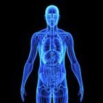 Vitalfeldtechnologie zur Ganzkörper- analyse