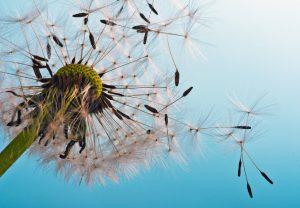 Pollenflug Allergie Neurodermitis Juckreiz